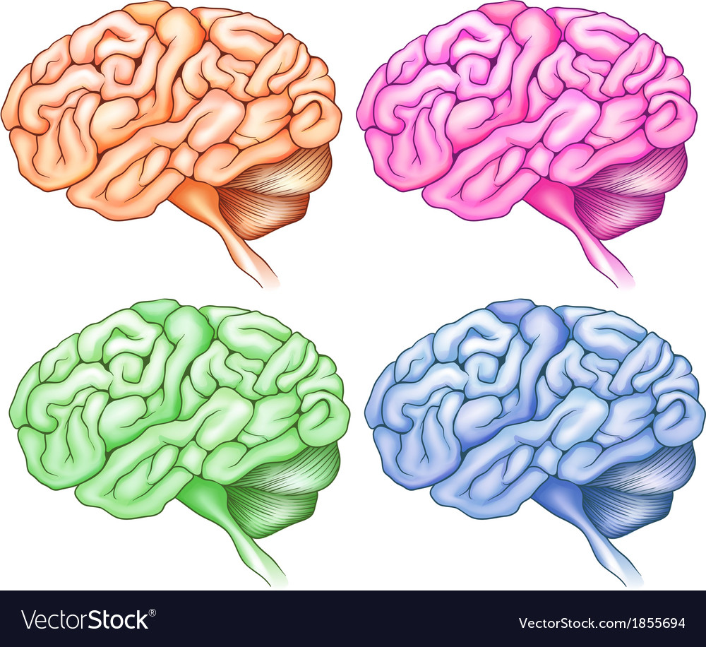 Human brains vector | Price: 1 Credit (USD $1)