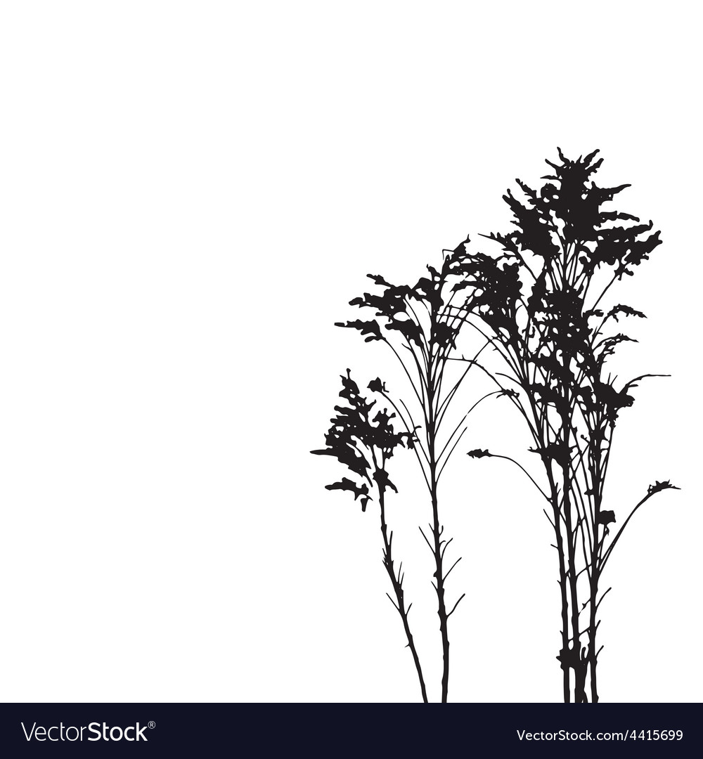 Wild herbs vector | Price: 1 Credit (USD $1)