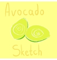 Avocado sketch had drawn with chalk vector