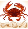 Red crab and few seashells vector