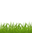 Fresh green grass isolated on white background vector
