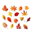 Autumnal red yellow and brown leaves vector