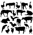 Black set silhouettes zoo animals collection on vector