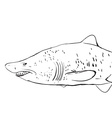 Great white shark underwater sketch black contour vector