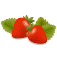 Two strawberries with three leaves vector