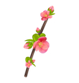 Branch of japanese quince chaenomeles japonica in vector