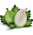 Breadfruit vector