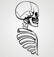 Skull draw vector