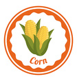 Corn design vector