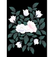 White roses on dark background vector