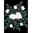 White roses on dark background vector