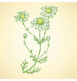 Daisy flower in sketch style vector