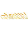 Ripe yellow wheat ears vector