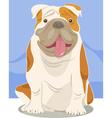English bulldog dog cartoon vector