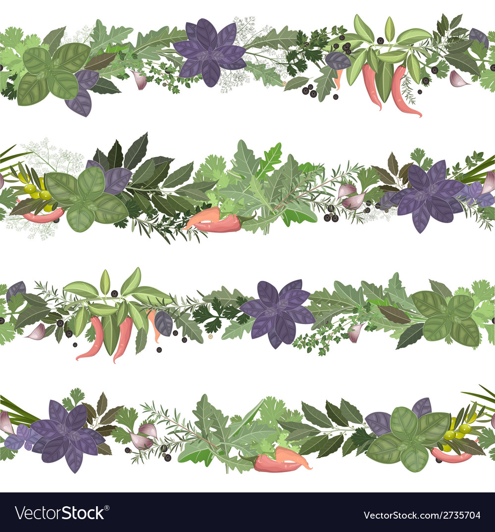 Seamless border of collection herbs and spices vector | Price: 1 Credit (USD $1)