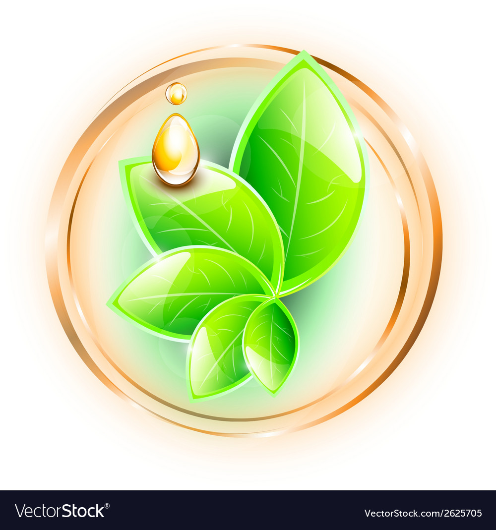 Green glossy leaves vector | Price: 1 Credit (USD $1)