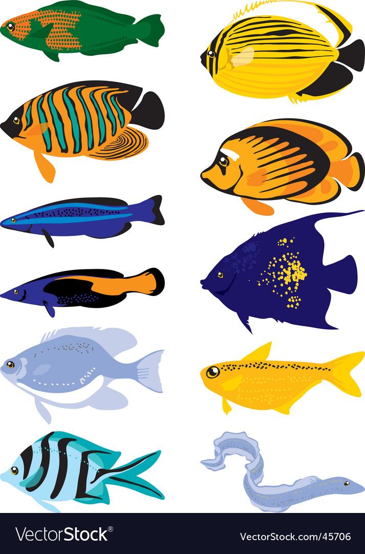 Tropical fish vector | Price: 1 Credit (USD $1)