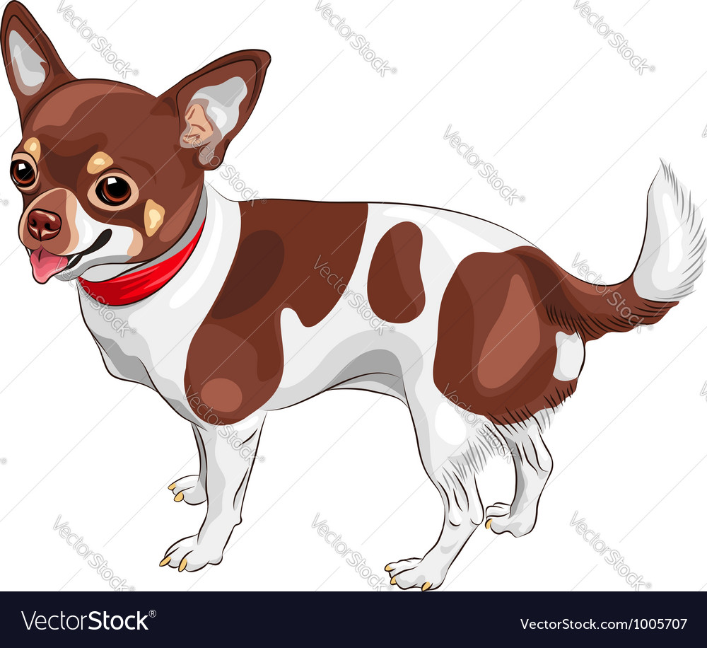 Cute dog chihuahua breed smiling vector | Price: 3 Credit (USD $3)