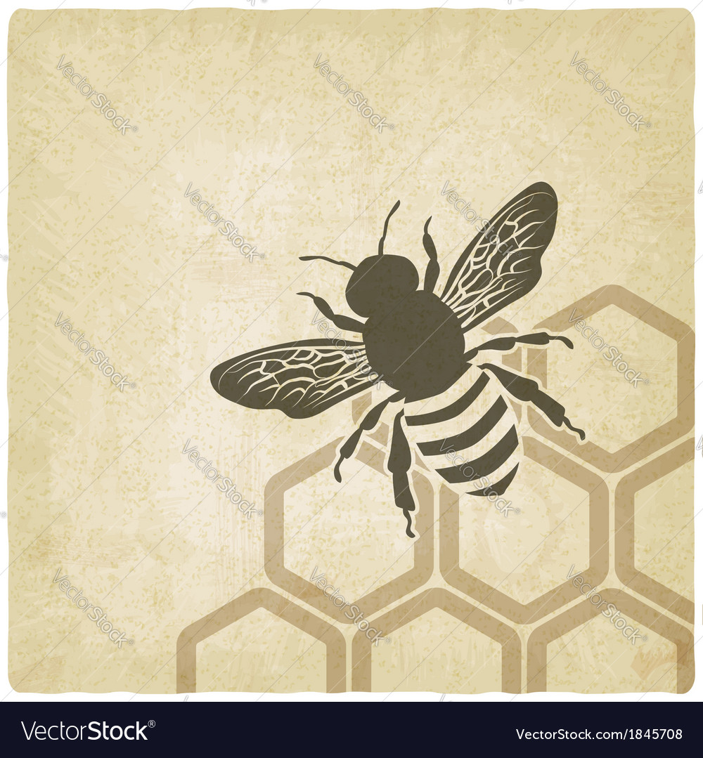 Bee old background vector | Price: 1 Credit (USD $1)