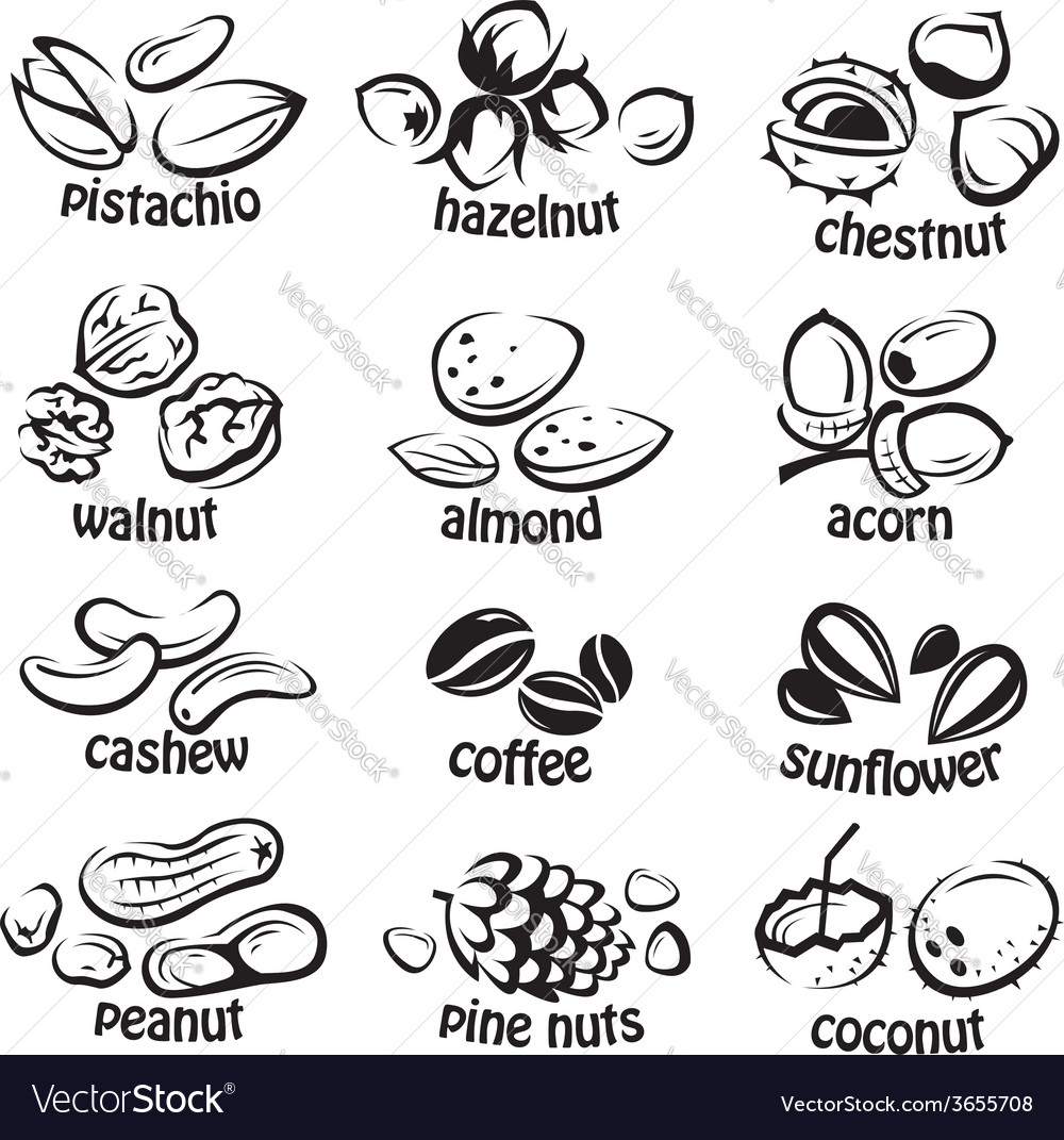 Nuts icon set vector | Price: 1 Credit (USD $1)