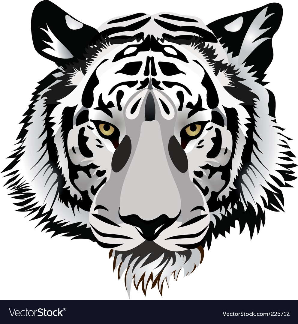 Tiger head vector | Price: 1 Credit (USD $1)