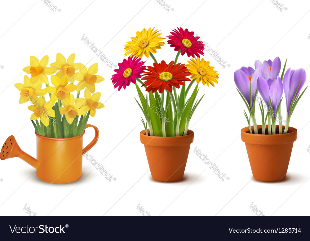 Collection of spring and summer colorful flowers vector | Price: 1 Credit (USD $1)