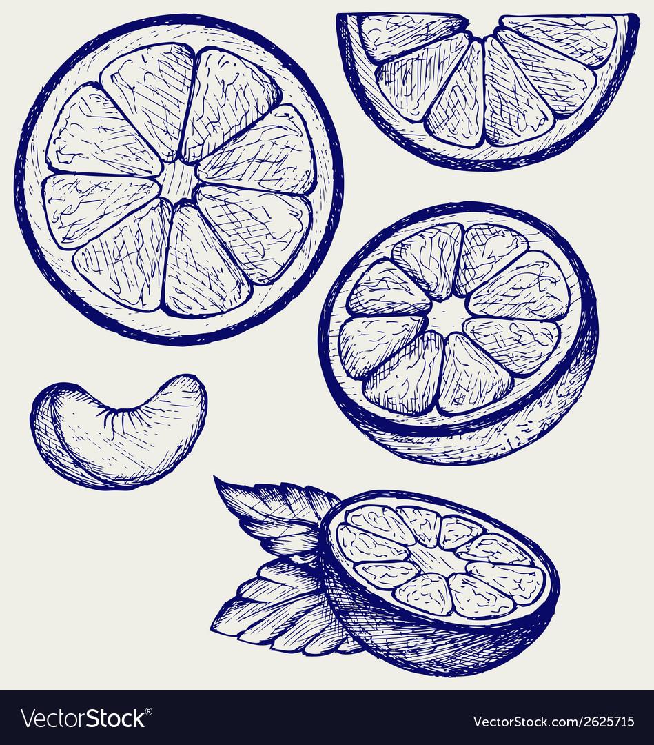 Oranges vector | Price: 1 Credit (USD $1)