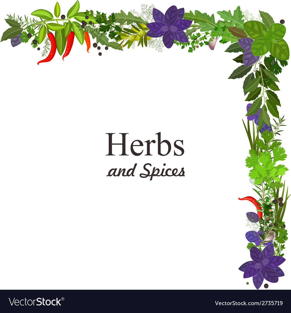 Collection of herbs and spices for you design vector | Price: 1 Credit (USD $1)