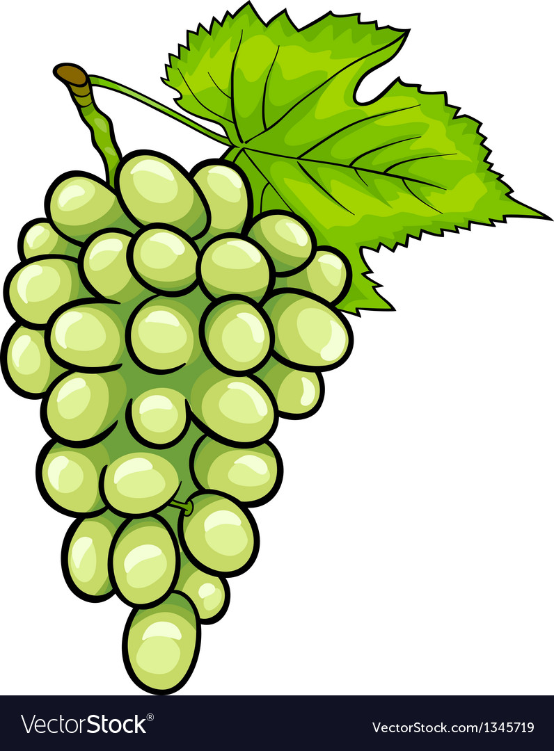 White grapes fruit cartoon vector | Price: 1 Credit (USD $1)