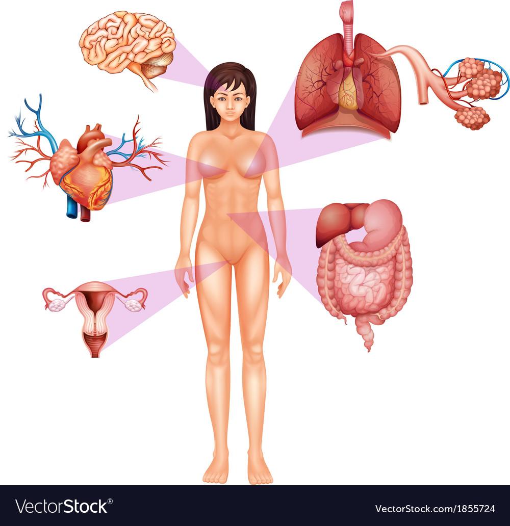Female body vector | Price: 1 Credit (USD $1)