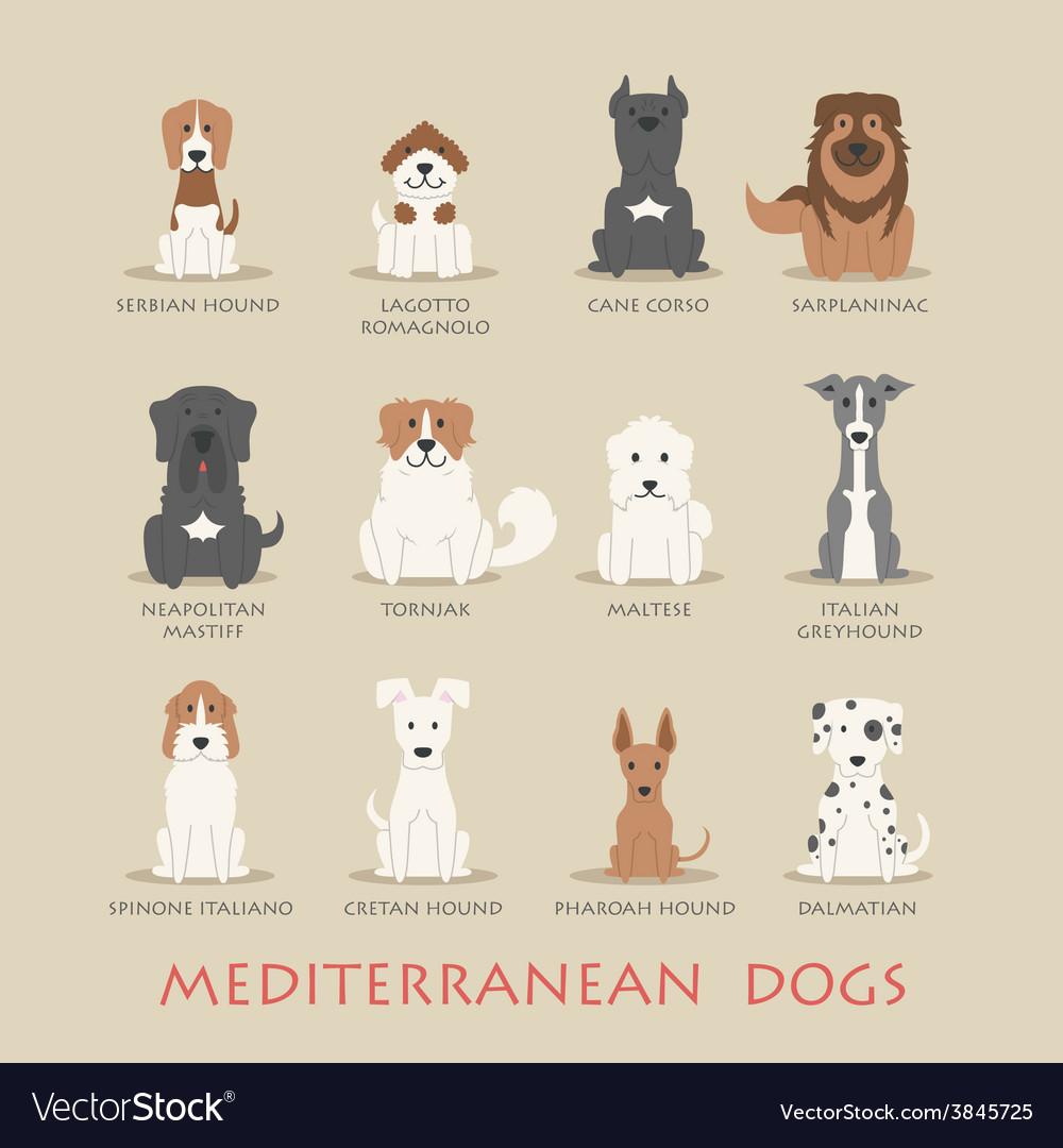 Set of mediterranean dogs vector | Price: 1 Credit (USD $1)