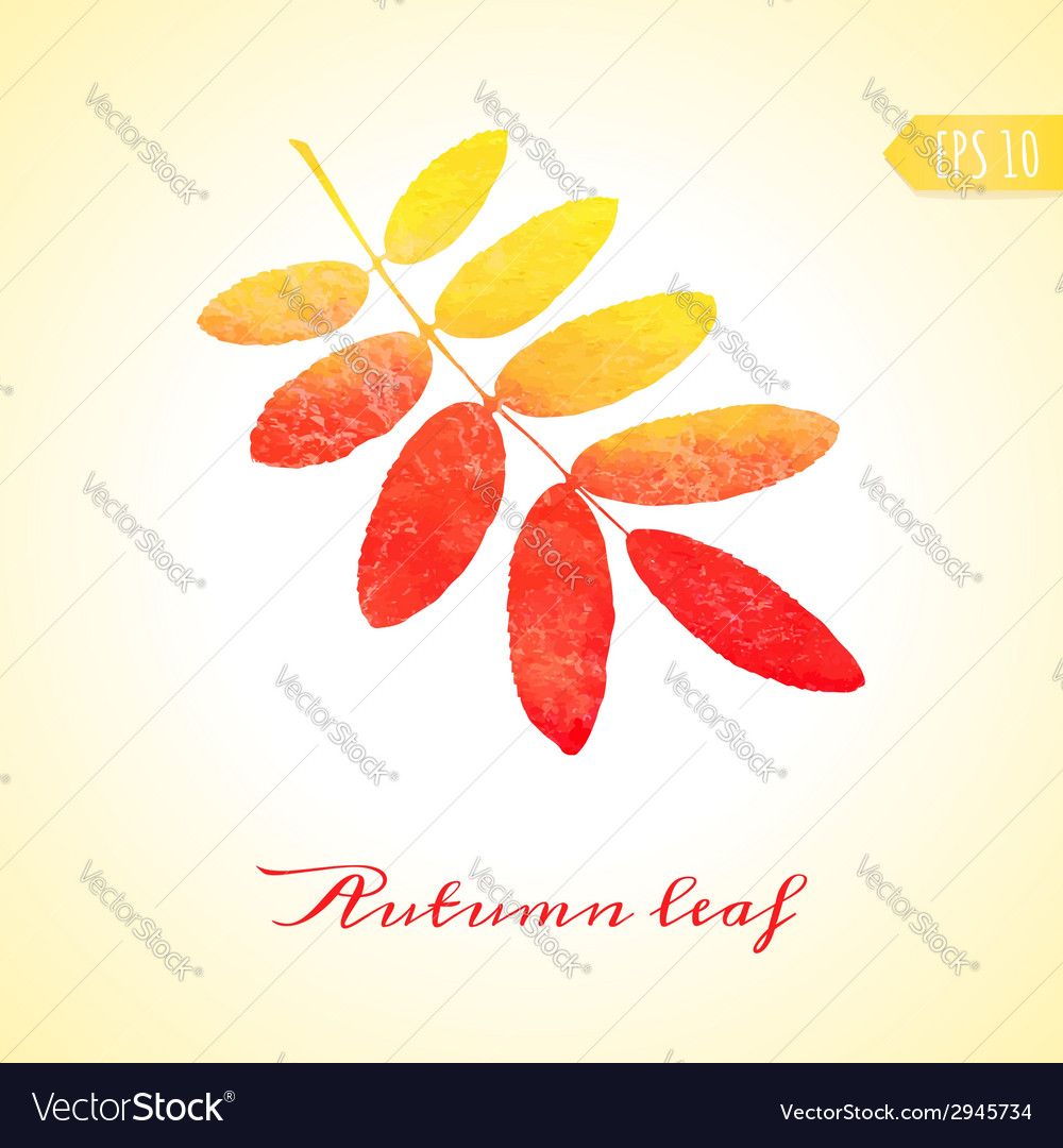 Autumn rowan leaf isolated element vector | Price: 1 Credit (USD $1)