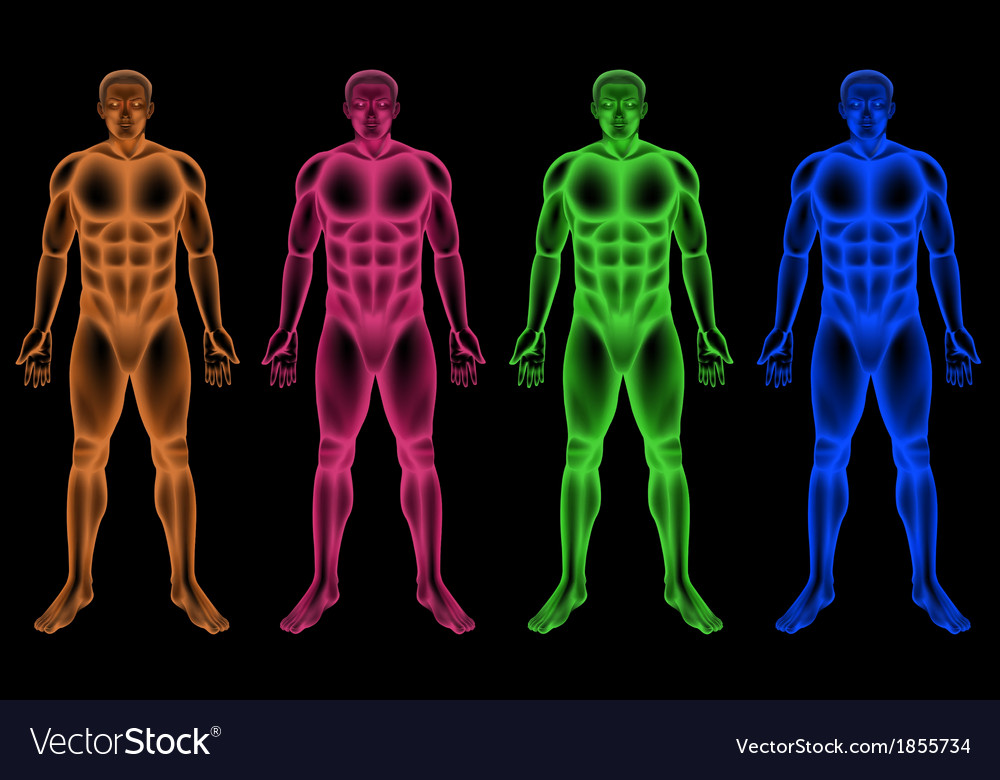 Male coloured bodies vector | Price: 1 Credit (USD $1)