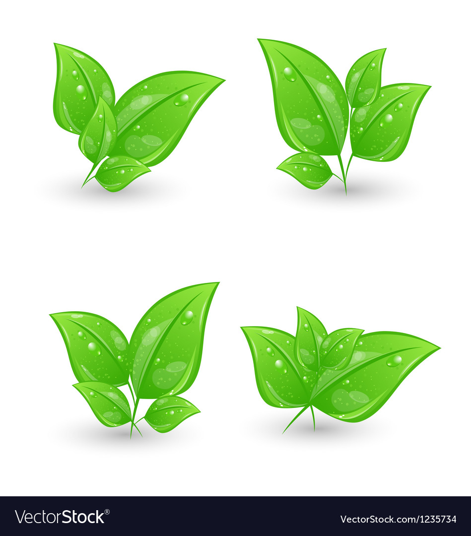 Set of green eco leaves isolated on white vector | Price: 1 Credit (USD $1)