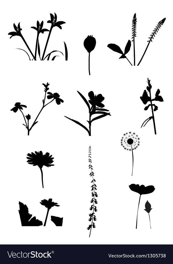 Collection of flower isolate vector | Price: 1 Credit (USD $1)