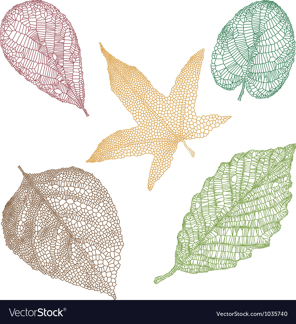 Detailed leaves vector | Price: 1 Credit (USD $1)