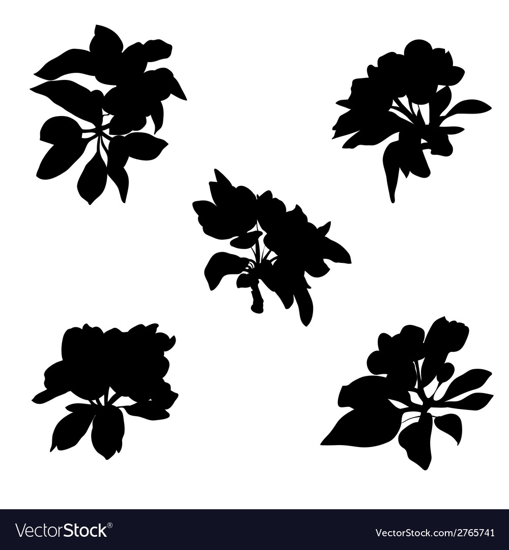 Apple flowers silhouettes vector | Price: 1 Credit (USD $1)