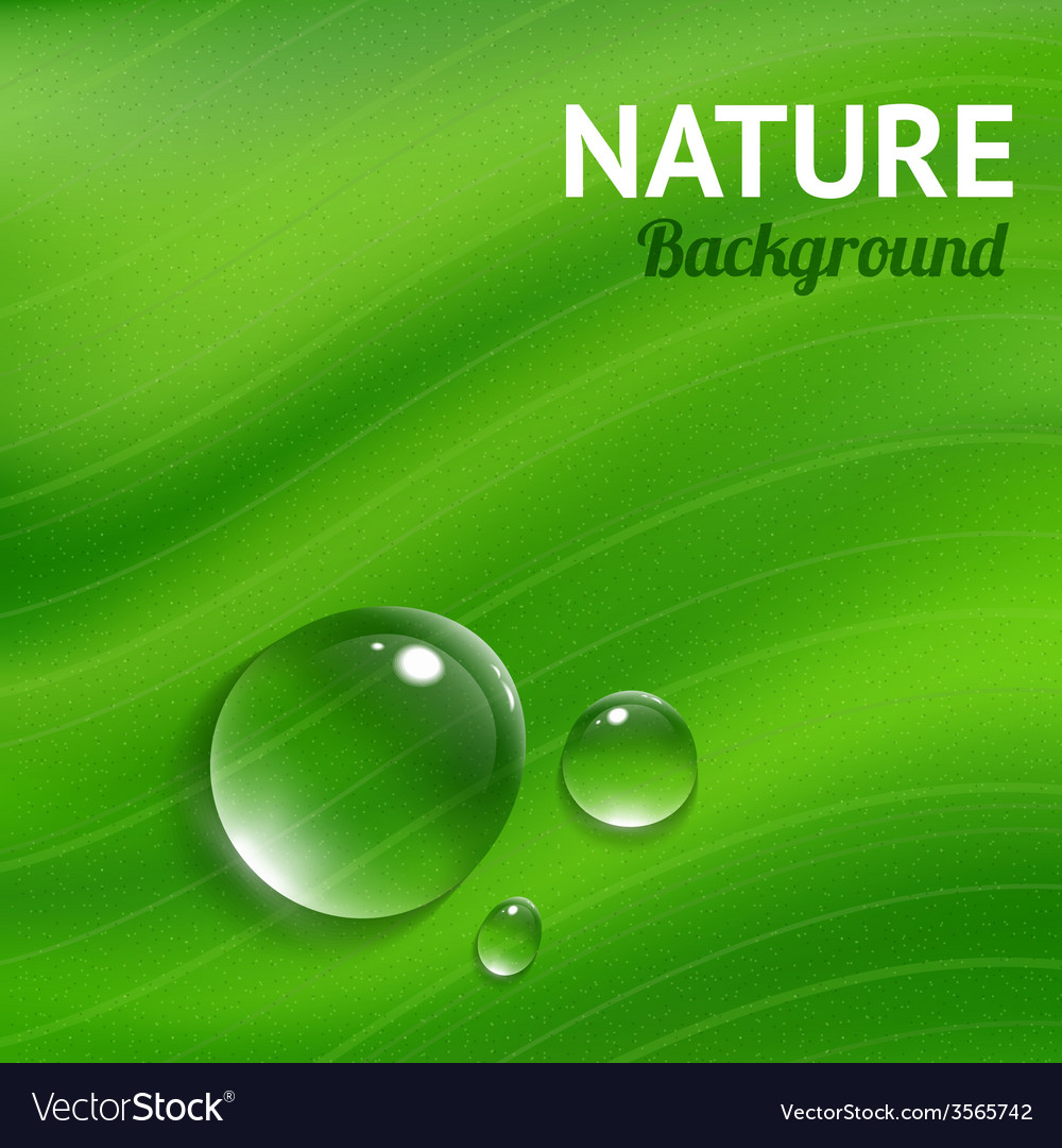 Nature background with transparent water drops vector | Price: 1 Credit (USD $1)