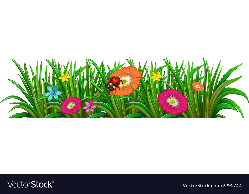 A garden with a blooming flowers and a ladybug vector | Price: 1 Credit (USD $1)