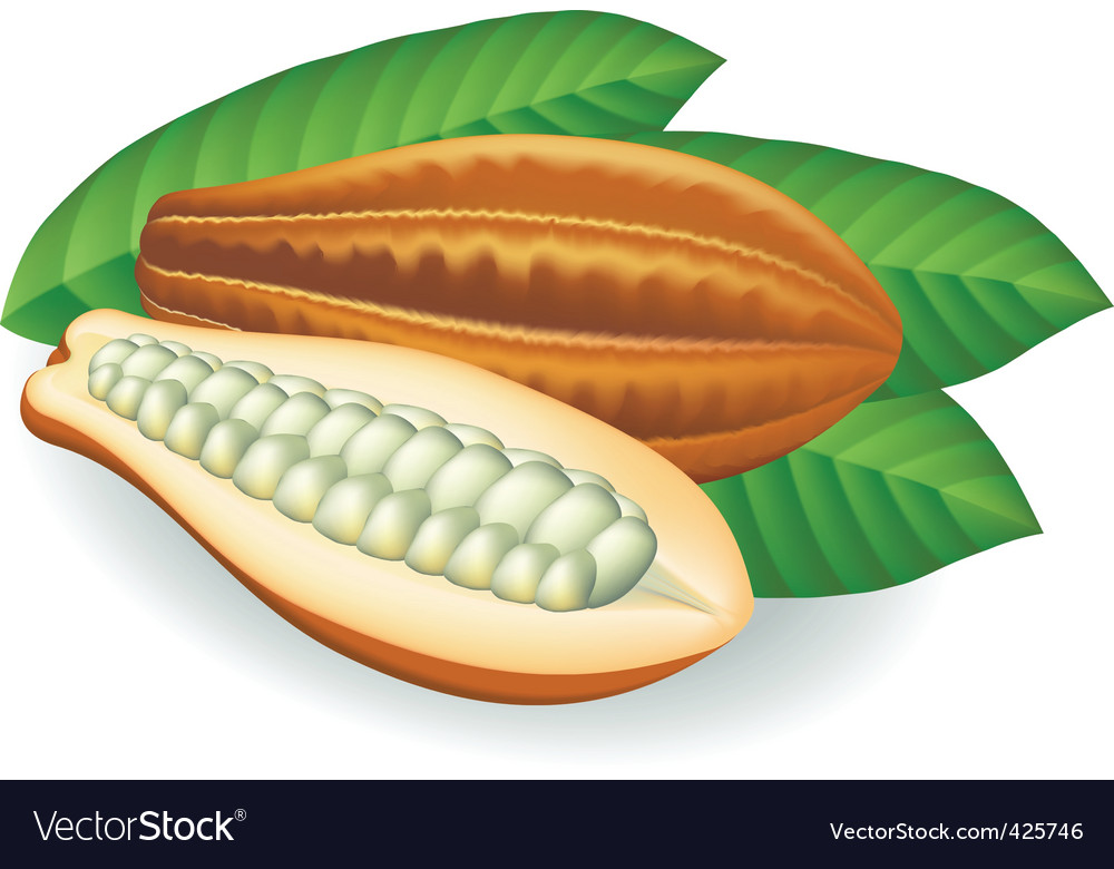 Beans vector illustration vector | Price: 1 Credit (USD $1)