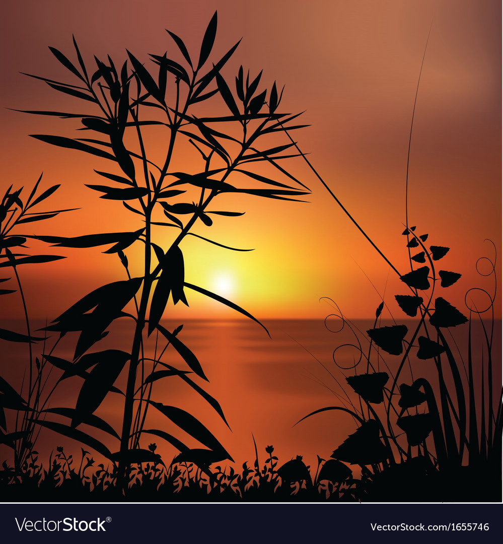 Sunset and plants silhouettes vector | Price: 1 Credit (USD $1)
