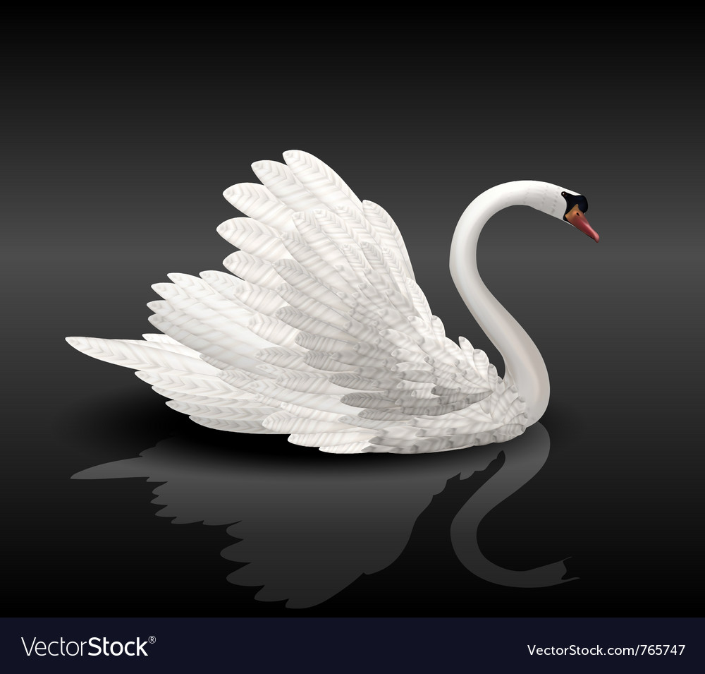 White swan on black water vector | Price: 3 Credit (USD $3)