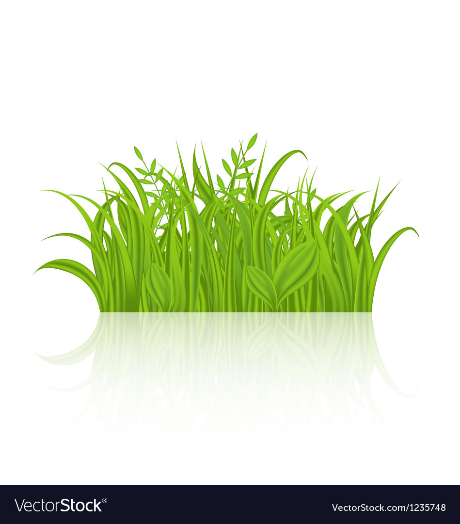 Green grass with reflection isolated on white vector | Price: 1 Credit (USD $1)