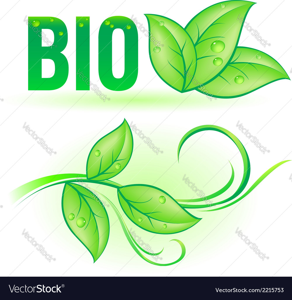 Bio word with leaf elements vector   Price: 1 Credit (USD $1)
