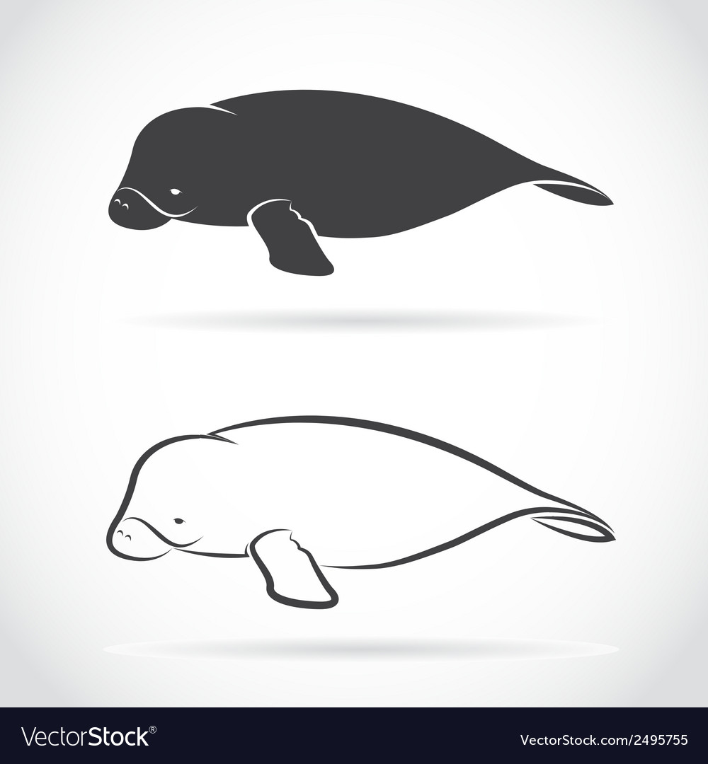 Image of an dugong vector | Price: 1 Credit (USD $1)