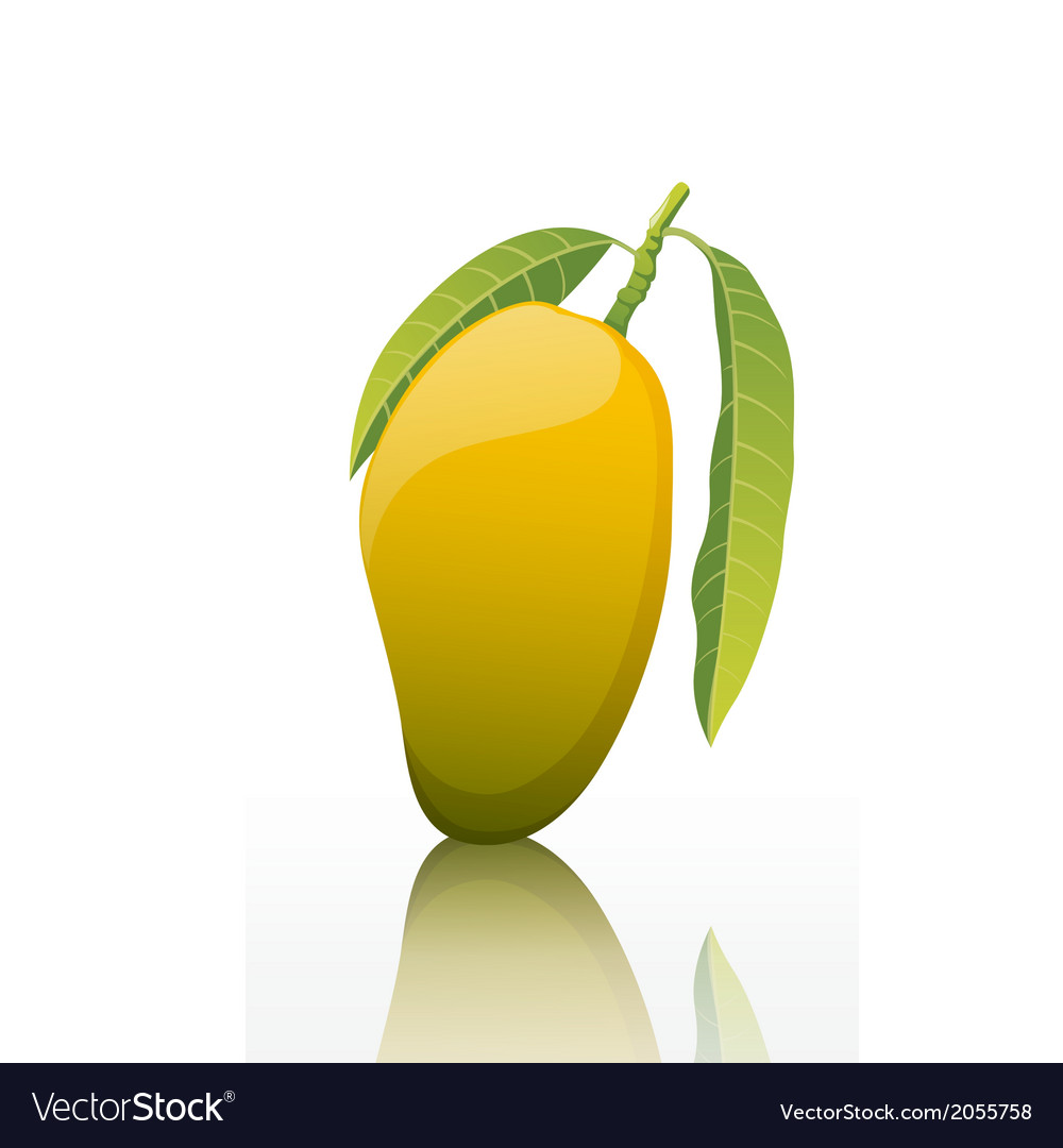 The-sweet-mango-fruit-isolated-on-white-background vector | Price: 1 Credit (USD $1)