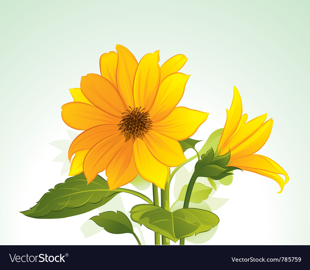 Yellow flower in bloom vector | Price: 3 Credit (USD $3)