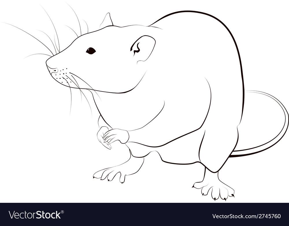 Rat sketch vector | Price: 1 Credit (USD $1)