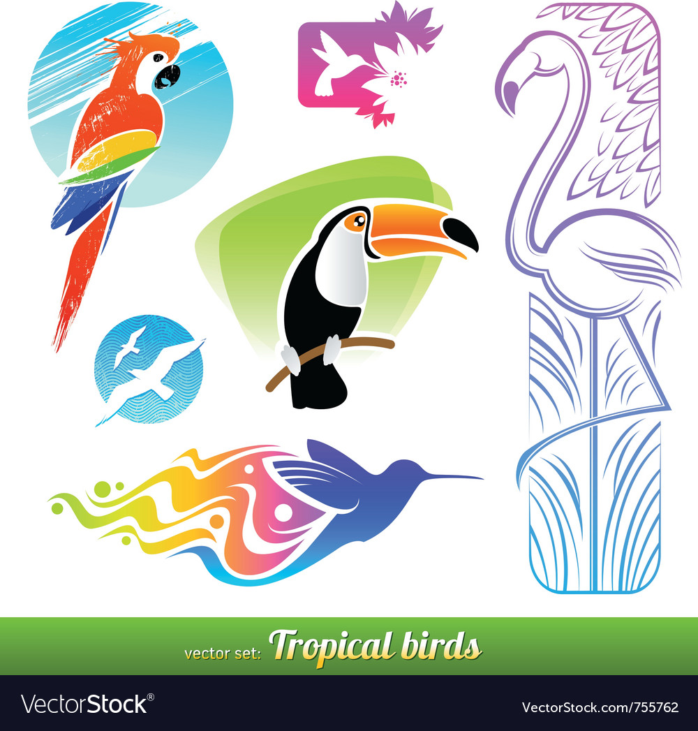 Set of stylized decorative tropical birds vector | Price: 1 Credit (USD $1)