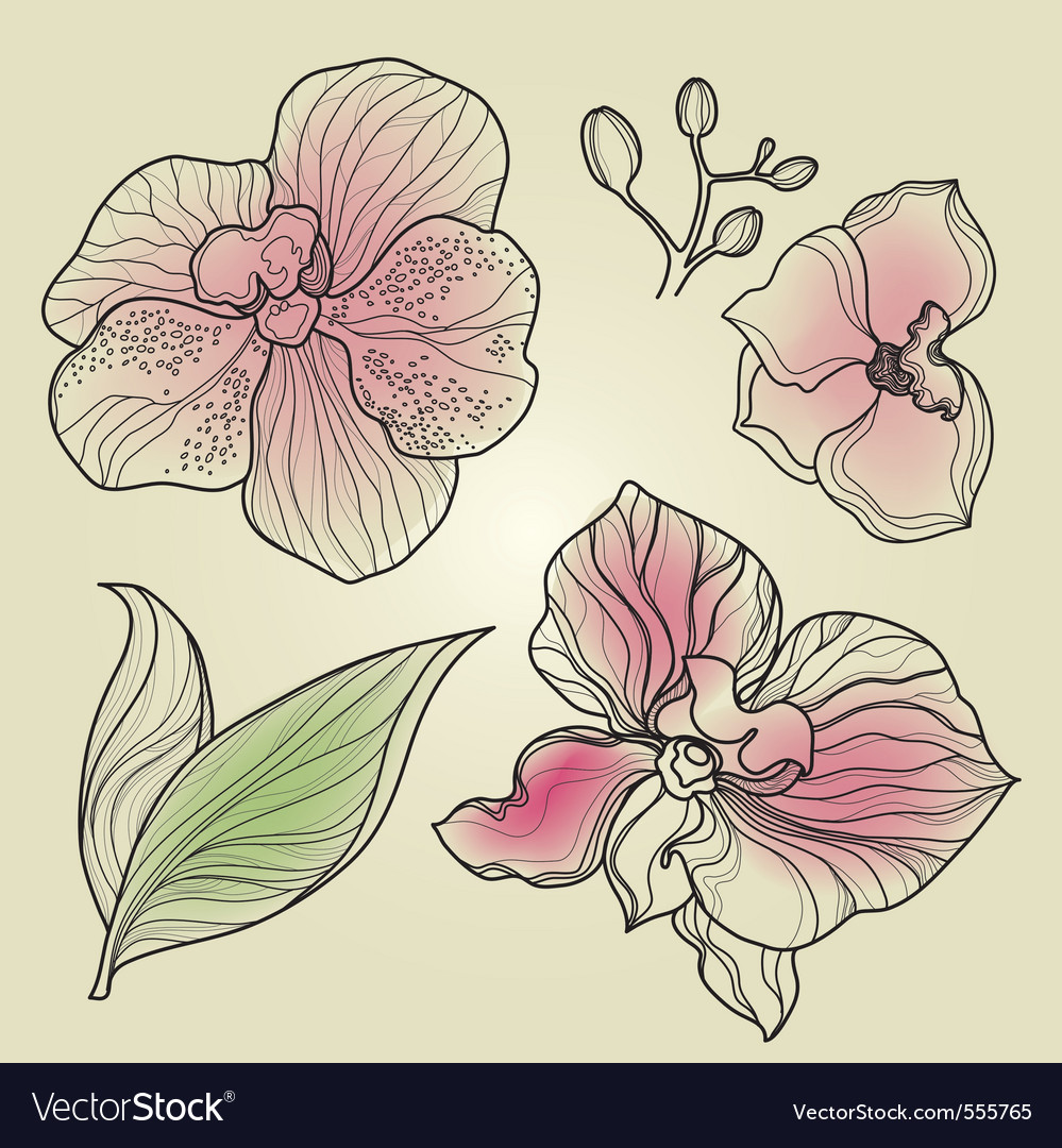Orchid design elements vector | Price: 1 Credit (USD $1)